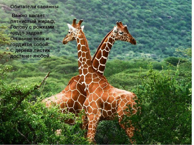 Обитатели саванны Важно шагает пятнистый жираф, Голову с рожками гордо задрав...