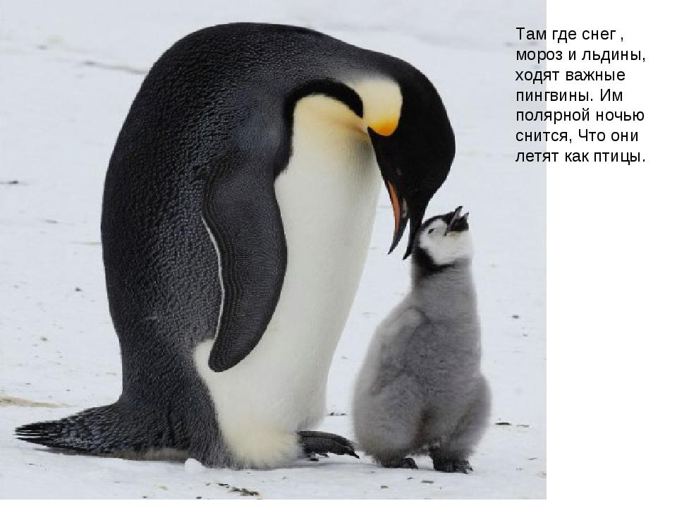 Там где снег , мороз и льдины, ходят важные пингвины. Им полярной ночью снитс...