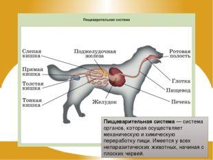 Пищеварительная система — система органов, которая осуществляет механическую