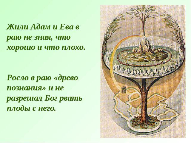 Жили Адам и Ева в раю не зная, что хорошо и что плохо. Росло в раю «древо поз...