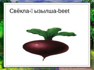 Свёкла-қызылша-beet Лазарева Лидия Андреевна, учитель начальных классов, Рижс