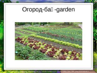 Огород-бақ-garden Лазарева Лидия Андреевна, учитель начальных классов, Рижска