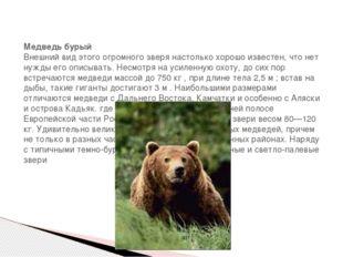 Медведь бурый Внешний вид этого огромного зверя настолько хорошо известен, ч