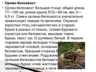 Орлан-белохвост Орлан-белохвост большая птица: общая длина 77—100 см, длина к
