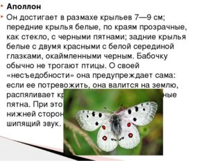 Аполлон Он достигает в размахе крыльев 7—9 см; передние крылья белые, по края