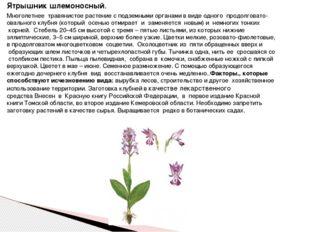 Ятрышник шлемоносный. Многолетнее травянистое растение с подземными органам