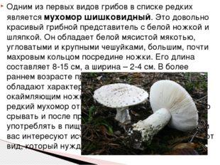 Одним из первых видов грибов в списке редких является мухомор шишковидный. Эт