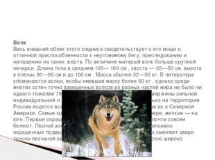 Волк Весь внешний облик этого хищника свидетельствует о его мощи и отличной