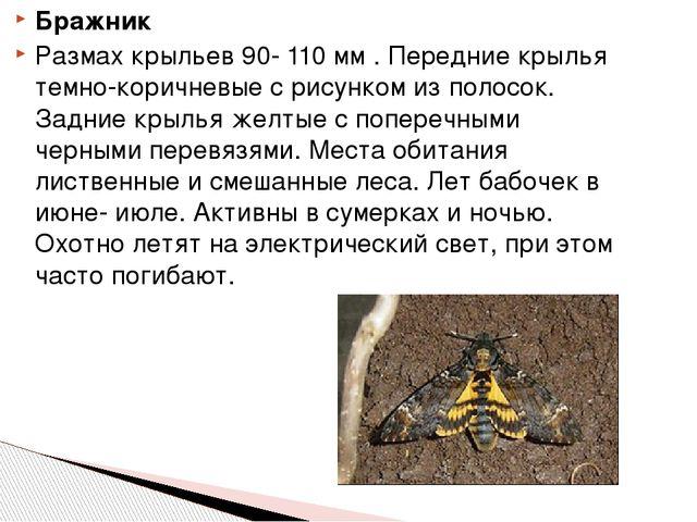 Бражник Размах крыльев 90- 110 мм . Передние крылья темно-коричневые с рисунк...