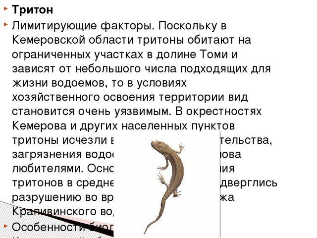 Тритон Лимитирующие факторы. Поскольку в Кемеровской области тритоны обитают...