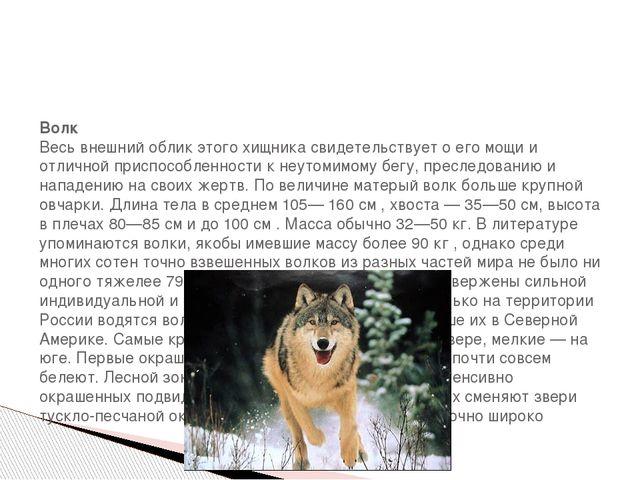 Волк Весь внешний облик этого хищника свидетельствует о его мощи и отличной...