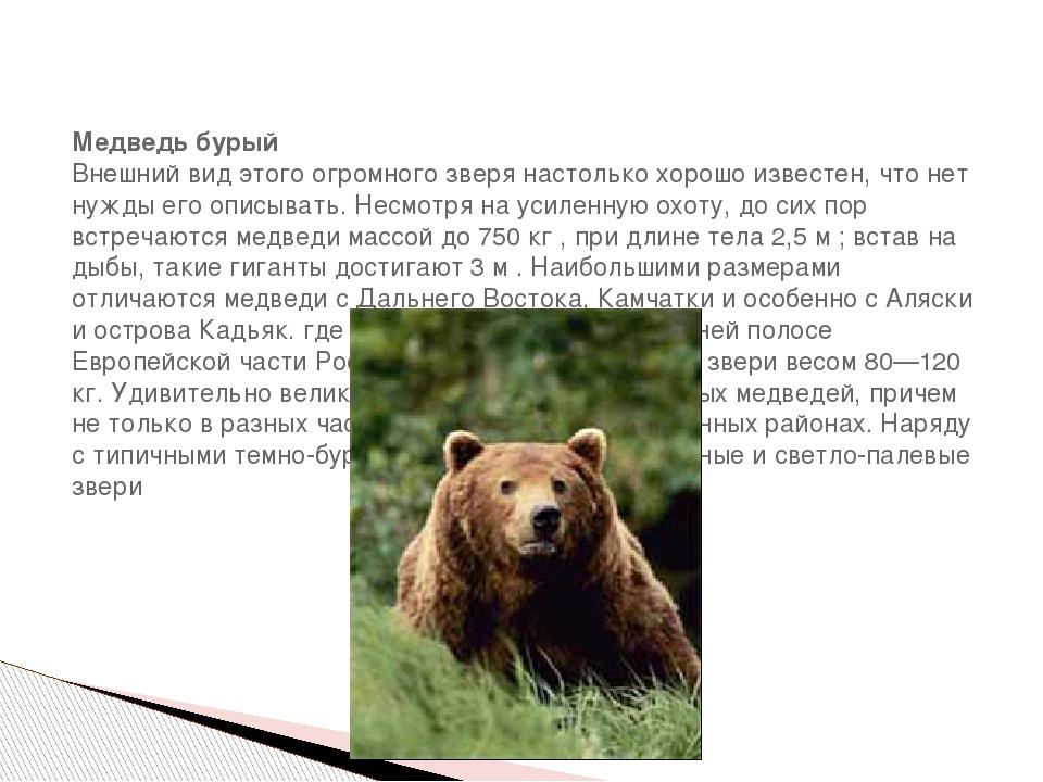 Медведь бурый Внешний вид этого огромного зверя настолько хорошо известен, ч...