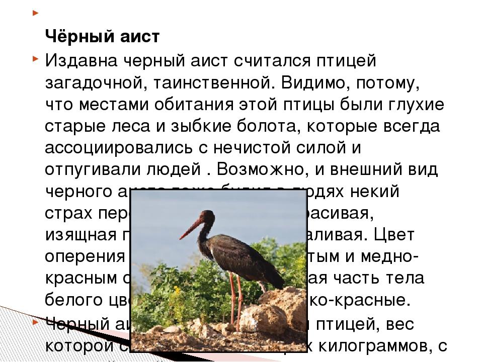 Чёрный аист Издавна черный аист считался птицей загадочной, таинственной. Ви...
