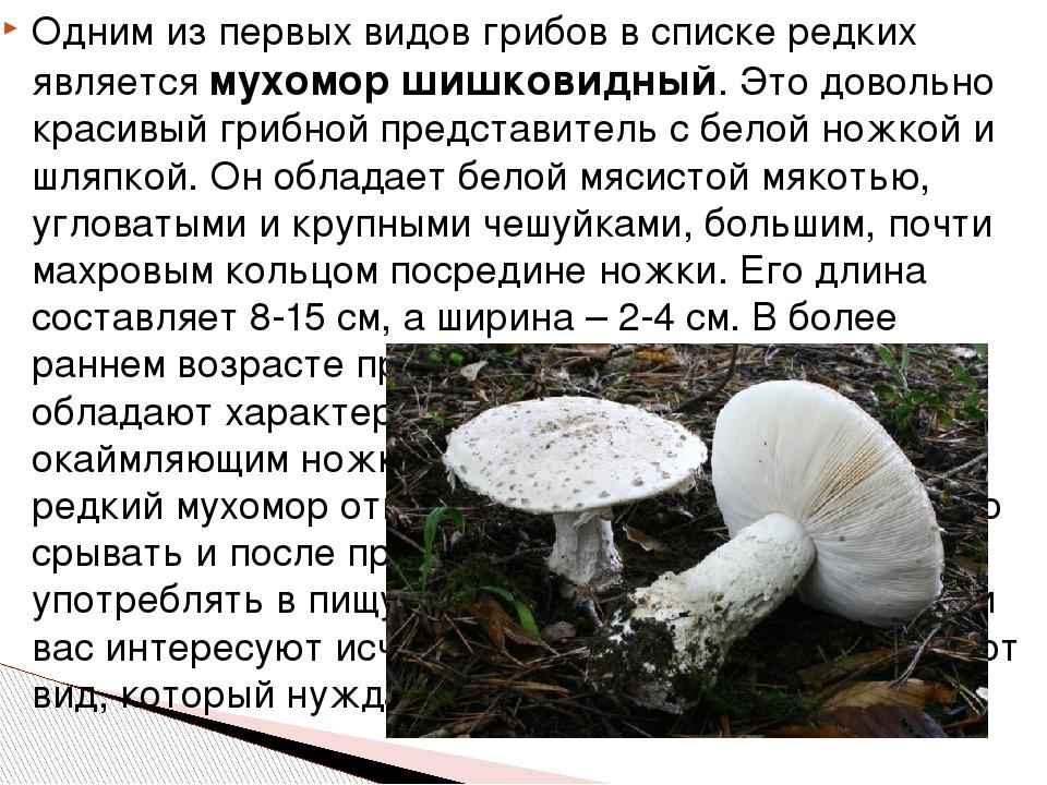 Одним из первых видов грибов в списке редких является мухомор шишковидный. Эт...
