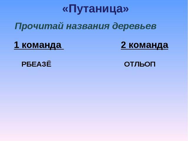 «Путаница» Прочитай названия деревьев 1 команда  2 команда  РБЕАЗЁО...