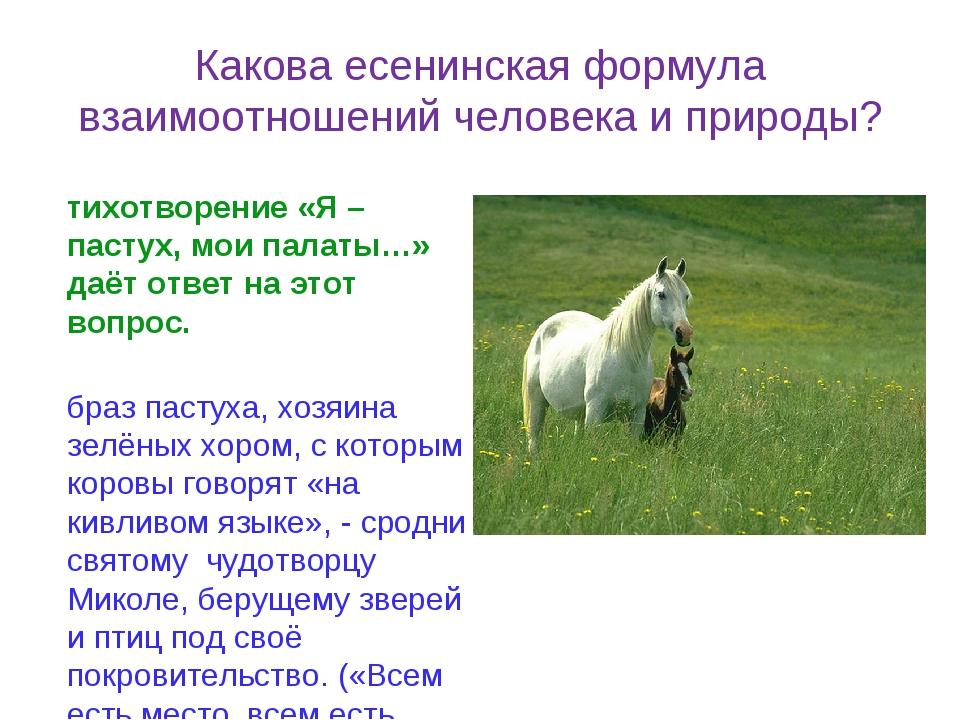 Какова есенинская формула взаимоотношений человека и природы? Стихотворение «...