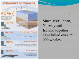 Since 1986 Japan, Norway and Iceland together have killed over 25 000 whales.