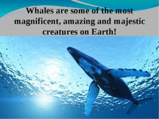 Whales are some of the most magnificent, amazing and majestic creatures on Ea