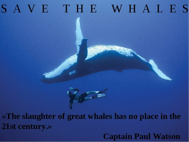 S A V E T H E W H A L E S «The slaughter of great whales has no place in the...