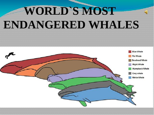 WORLD`S MOST ENDANGERED WHALES