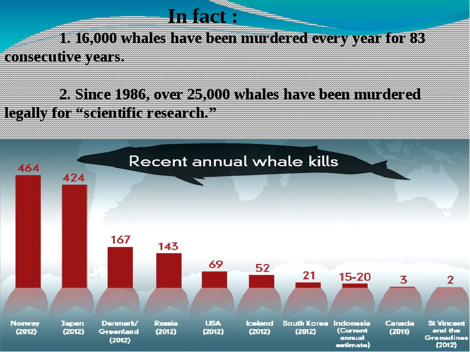 In fact : 1. 16,000 whales have been murdered every year for 83 consecutive...
