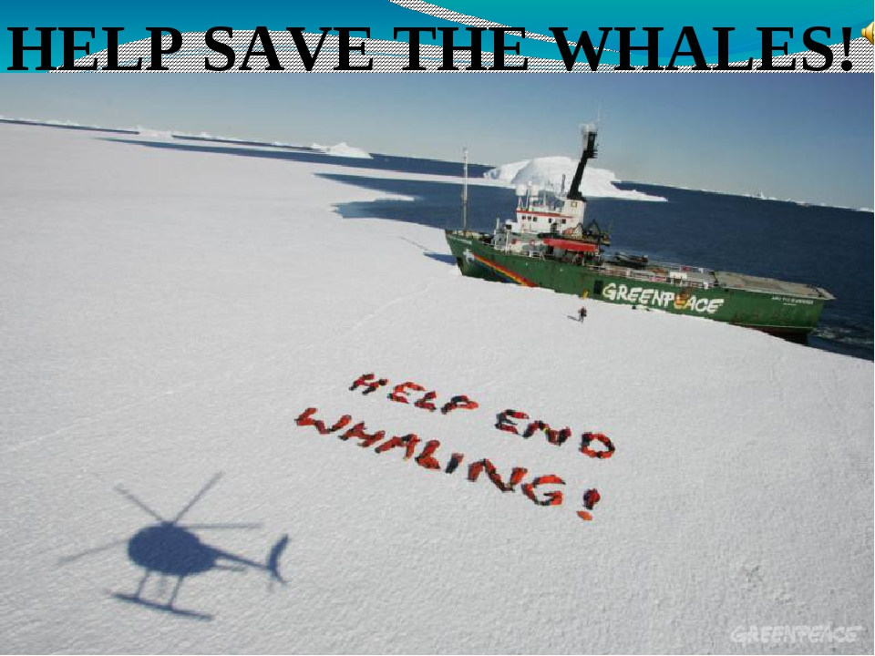 HELP SAVE THE WHALES!