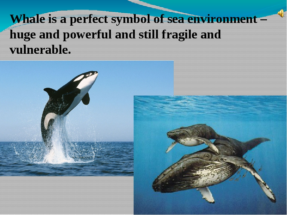 Whale is a perfect symbol of sea environment – huge and powerful and still fr...