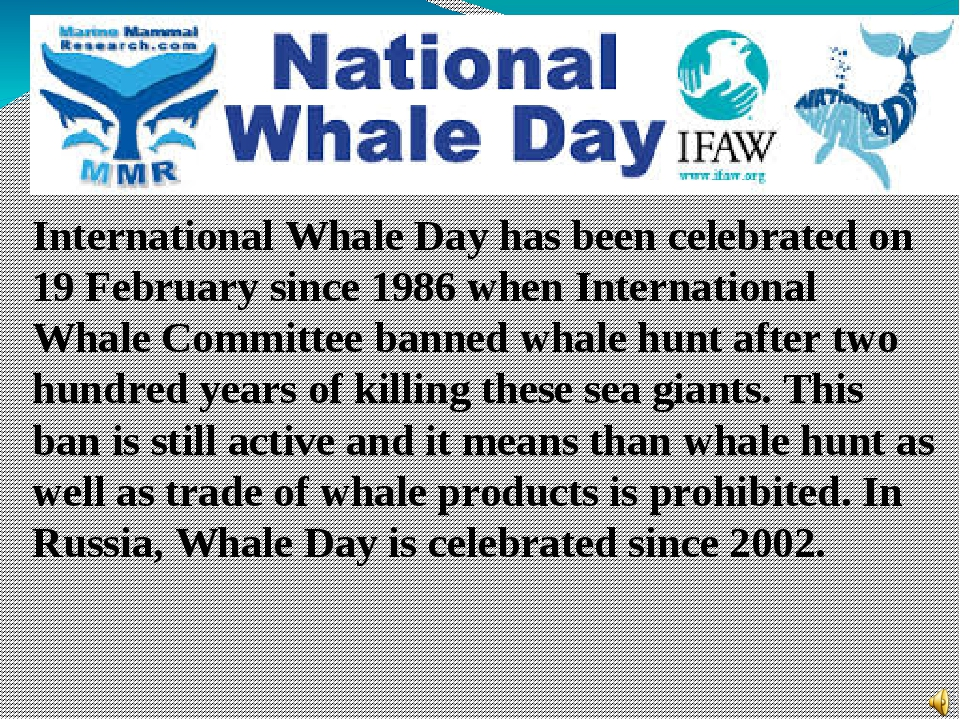 International Whale Day has been celebrated on 19 February since 1986 when In...