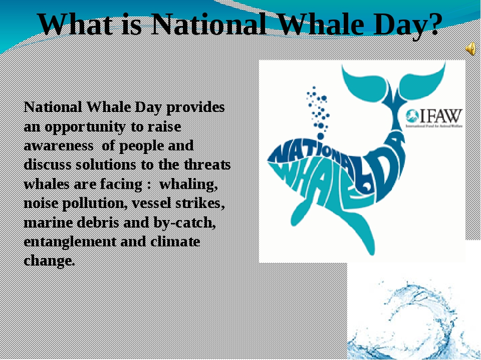 National Whale Day provides an opportunity to raise awareness of people and d...