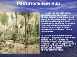 Возросло разнообразие голосеменных растений, образовавших обширные леса саго