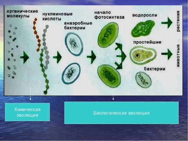 Химическая эволюция Биологическая эволюция