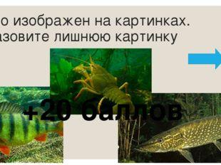 Найдите для начала фразы ее окончание: В «верхнем этаже» озера обитают мелкие
