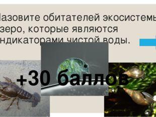 Назовите лесных производителей кедр ель пихта сосна Дополнительно команда пол