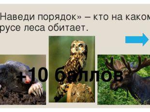 Назовите животных на картинках. Назовите лишнего животного. Обоснуйте выбор +