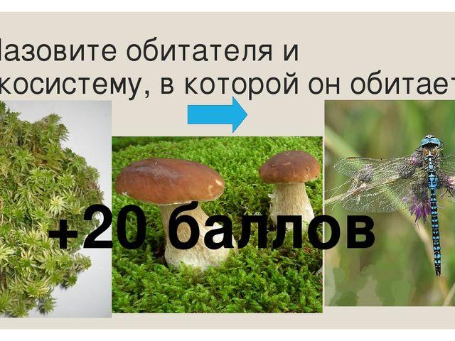 Кто относится к редуцентам (разрушителям)? мхи грибы лишайники папоротники ба...