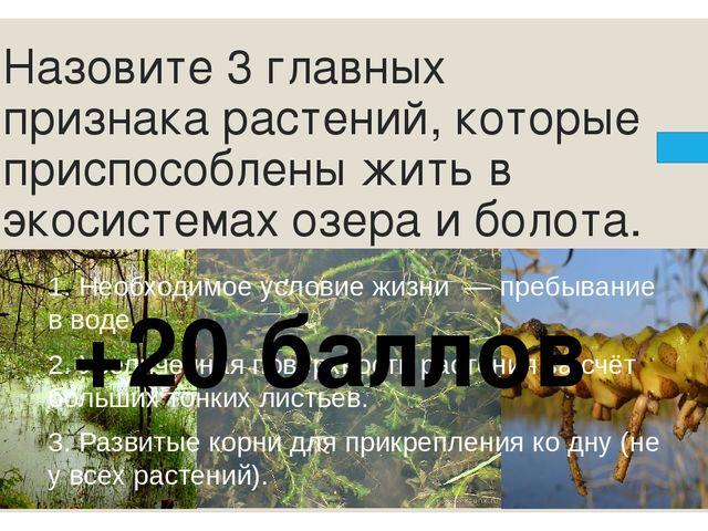 «Наведи порядок» – кто на каком ярусе леса обитает. +10 баллов