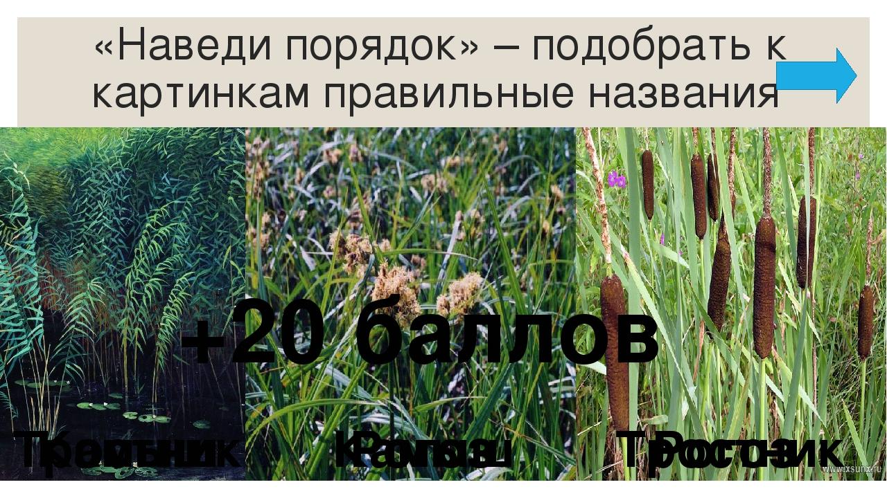Какие животные похожи на зайца тем, что меняют весной и осенью свой окрас? +1...
