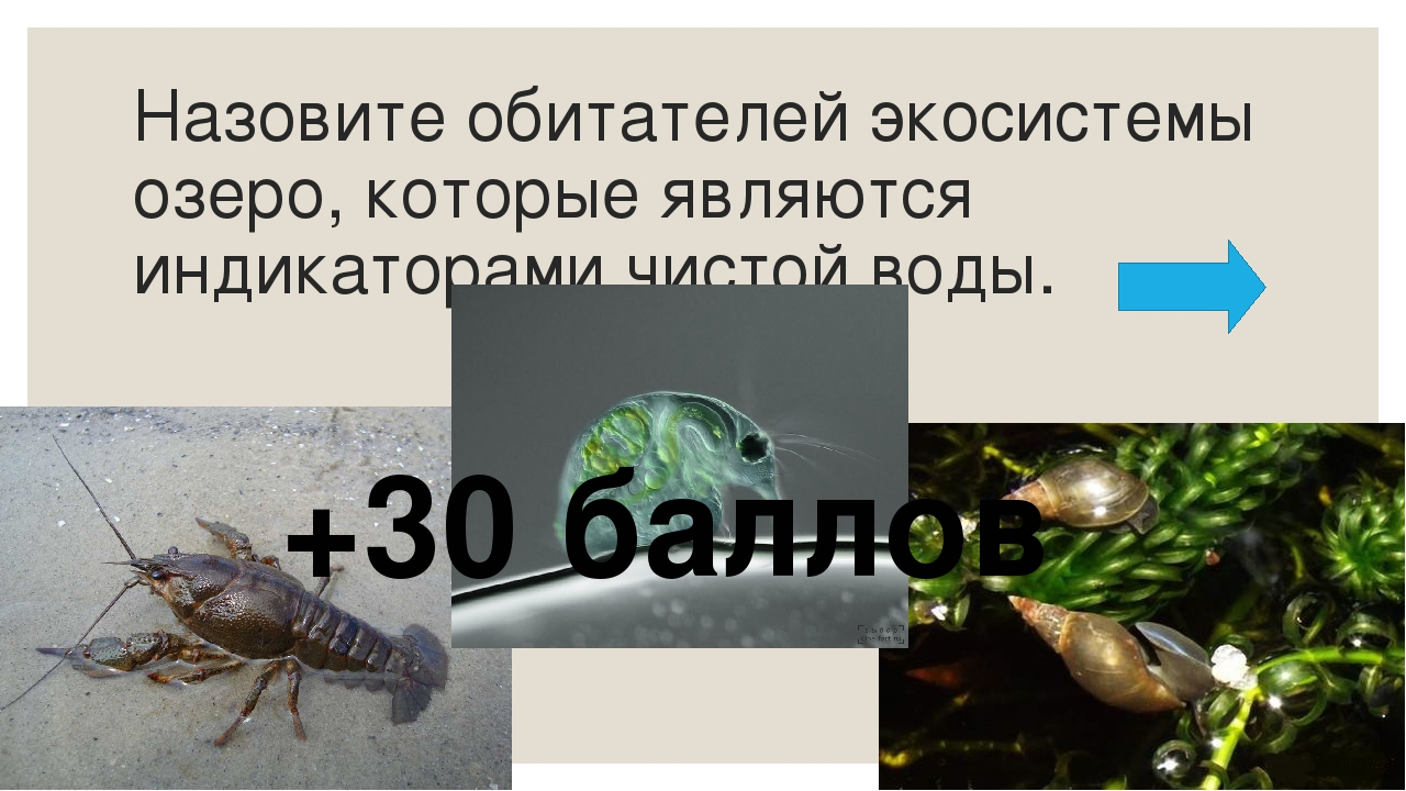 Назовите лесных производителей кедр ель пихта сосна Дополнительно команда пол...