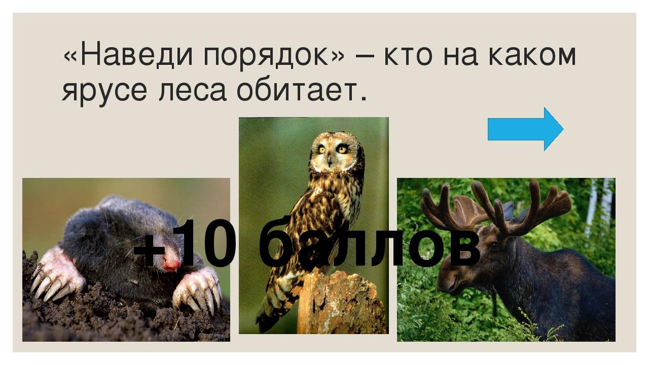 Назовите животных на картинках. Назовите лишнего животного. Обоснуйте выбор +...