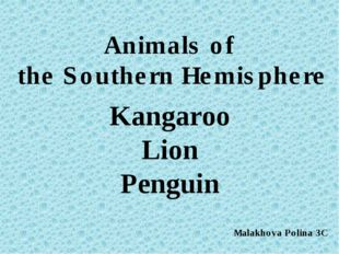 Kangaroo Lion Penguin Animals of the Southern Hemisphere Malakhova Polina 3C
