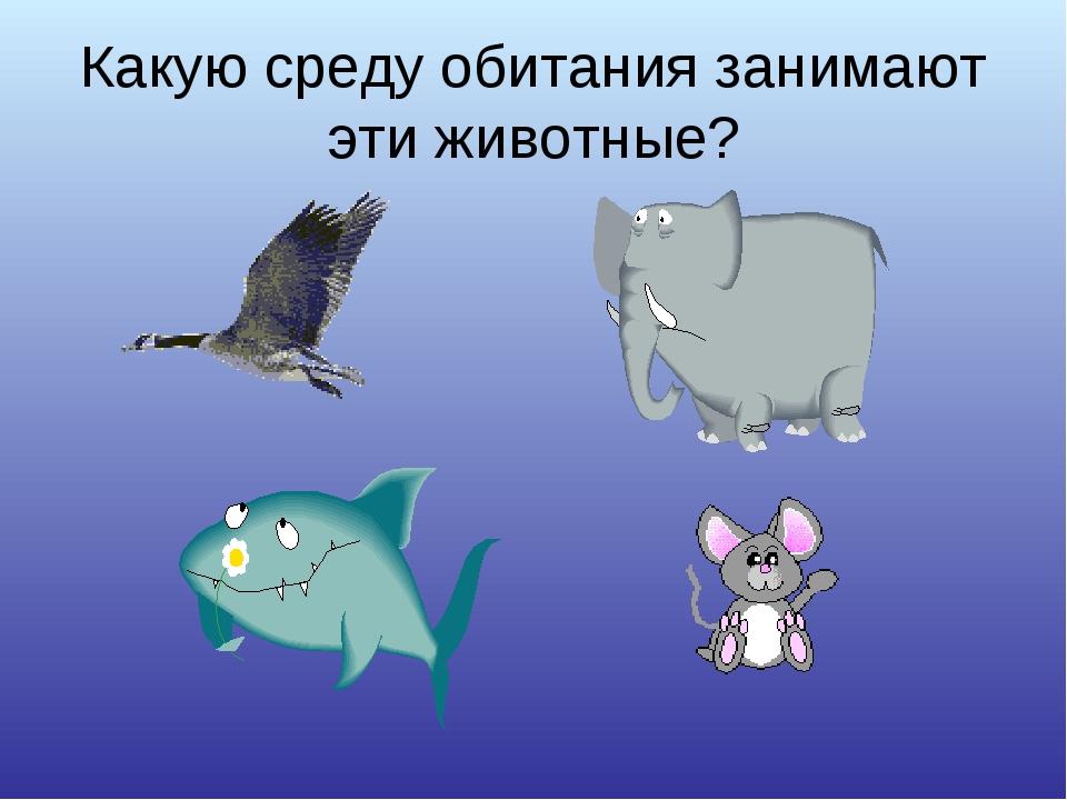 Какую среду обитания занимают эти животные?