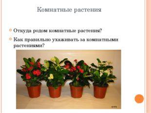 Комнатные растения Откуда родом комнатные растения? Как правильно ухаживать з