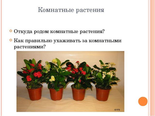 Комнатные растения Откуда родом комнатные растения? Как правильно ухаживать з...