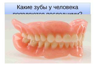 Какие зубы у человека появляются последними?