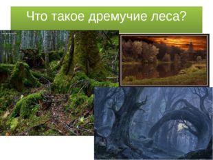Что такое дремучие леса?