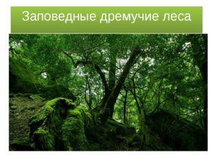Заповедные дремучие леса