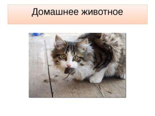 Домашнее животное