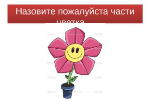 Назовите пожалуйста части цветка…