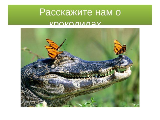 Расскажите нам о крокодилах…