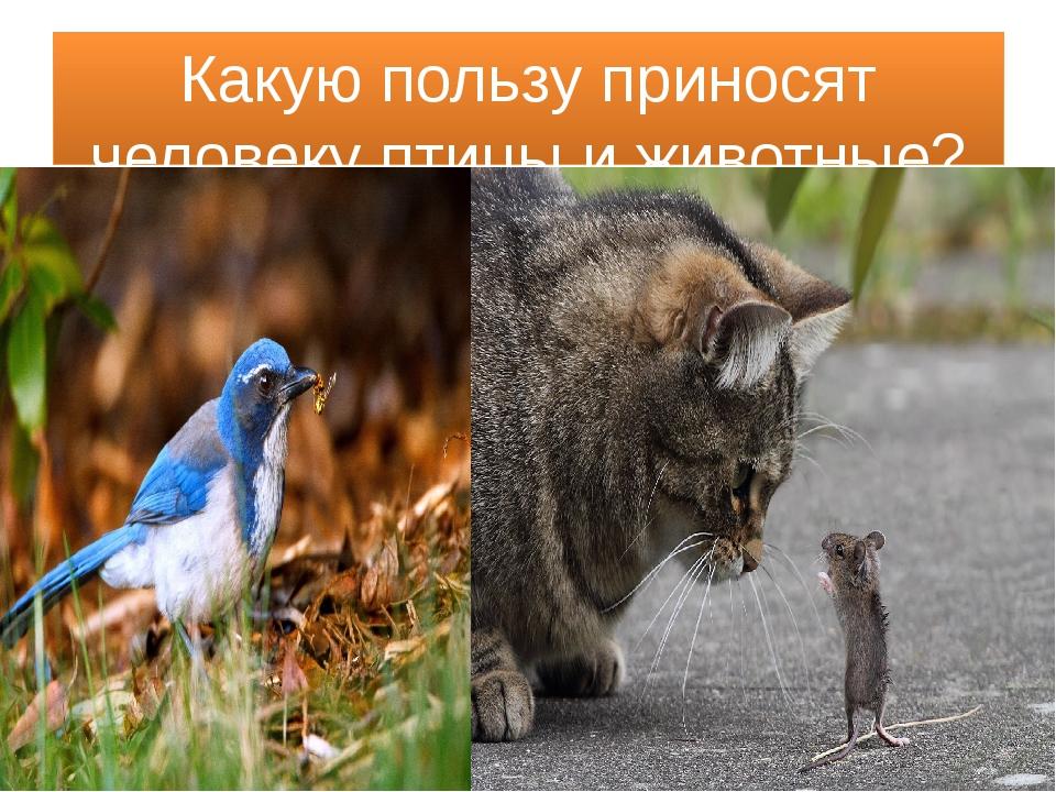 Какую пользу приносят человеку птицы и животные?